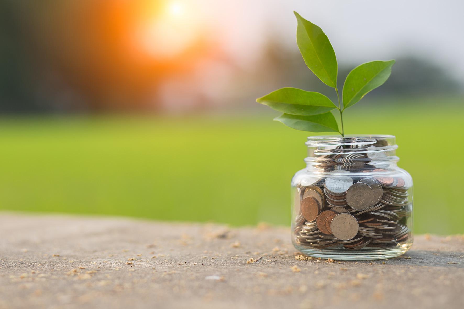Honorar – ein Glas mit Geld aus dem eine Pflanze wächst