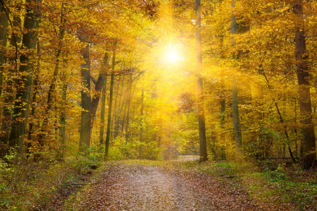Wandercoaching – ein Waldweg